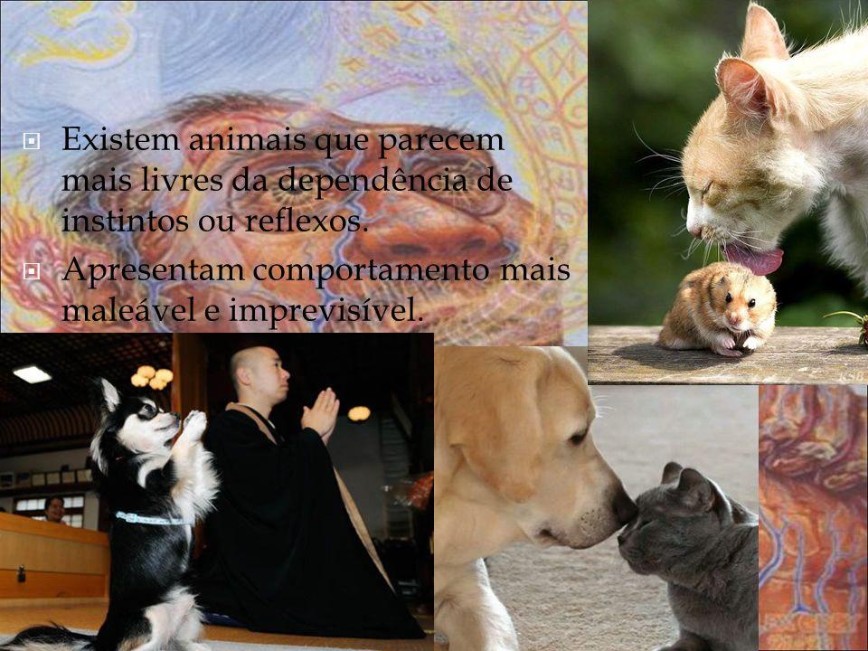 Existem animais que parecem mais livres da dependência de instintos ou reflexos.