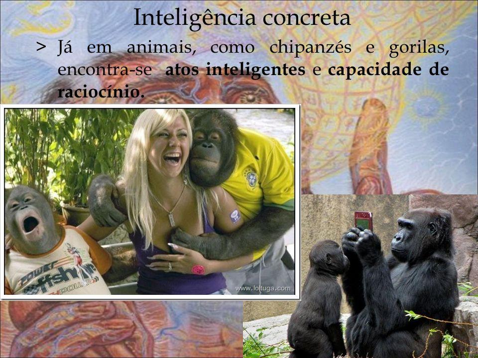 Inteligência concreta