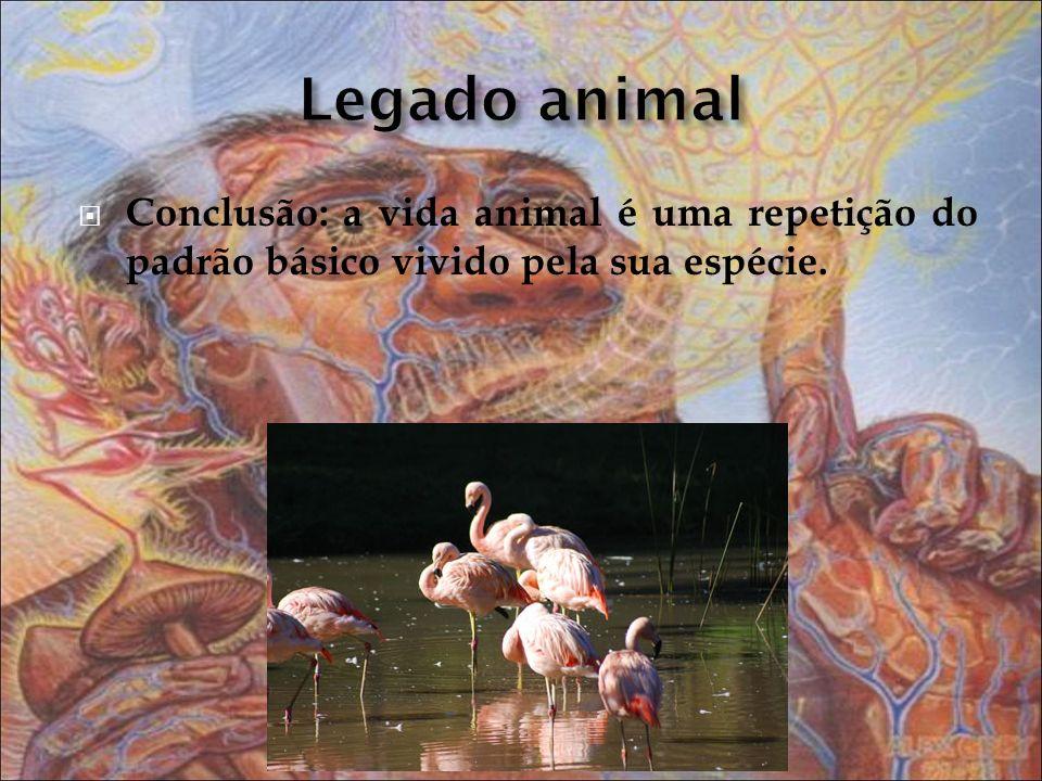 Legado animal Conclusão: a vida animal é uma repetição do padrão básico vivido pela sua espécie.