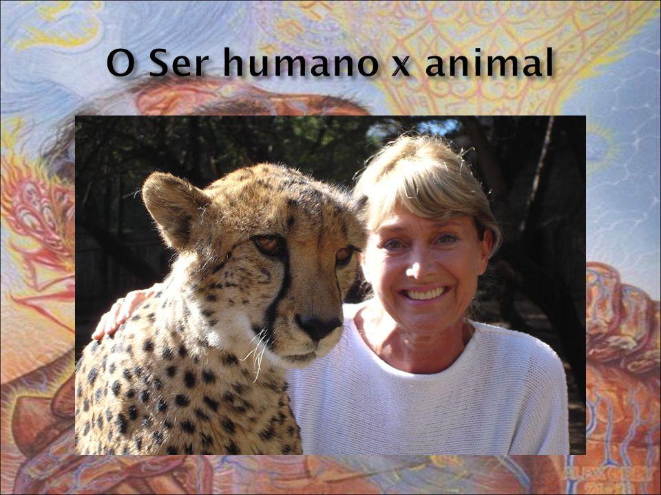 O Ser humano x animal