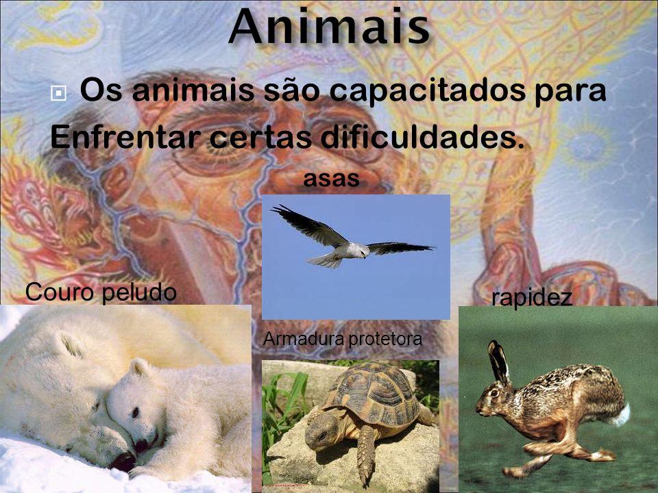 Animais Os animais são capacitados para Enfrentar certas dificuldades.