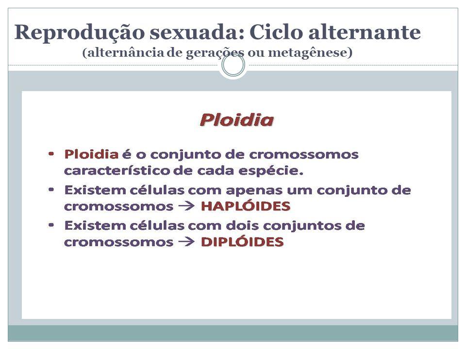 Reprodução sexuada: Ciclo alternante (alternância de gerações ou metagênese)