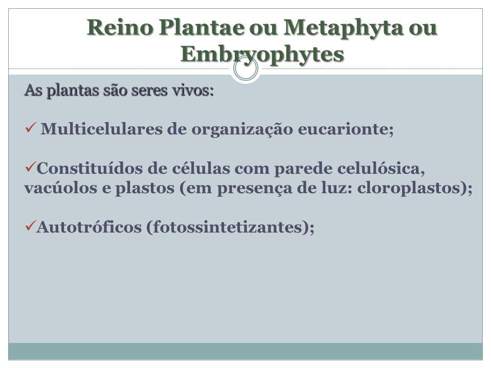 Reino Plantae ou Metaphyta ou Embryophytes