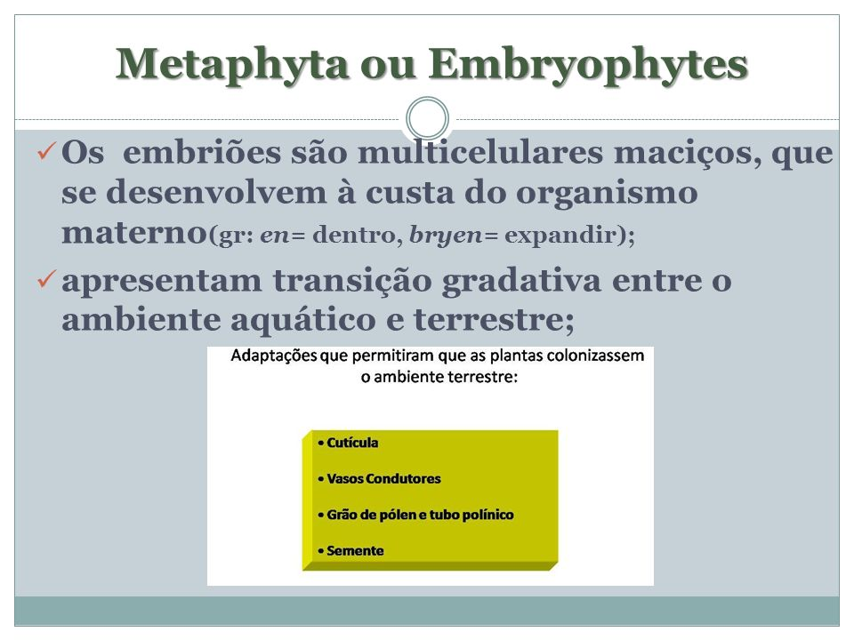 Metaphyta ou Embryophytes