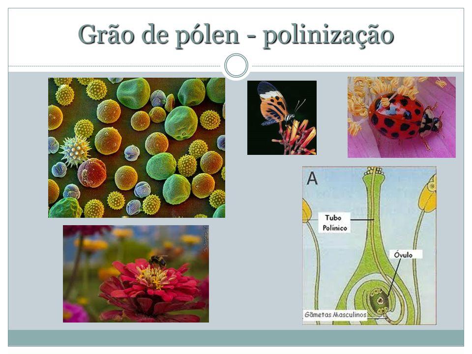 Grão de pólen - polinização