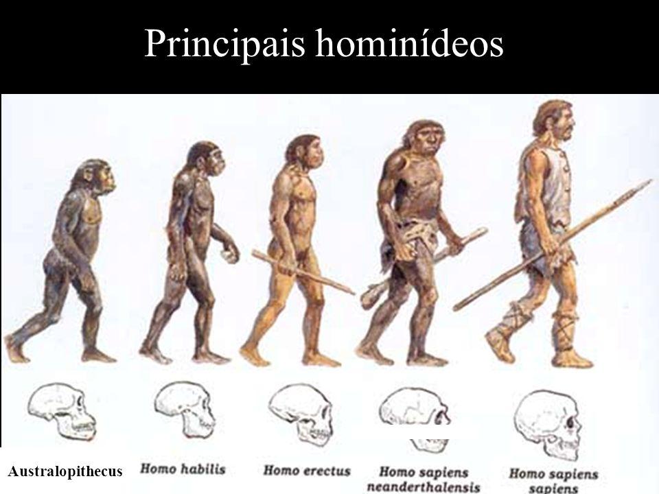 Principais hominídeos
