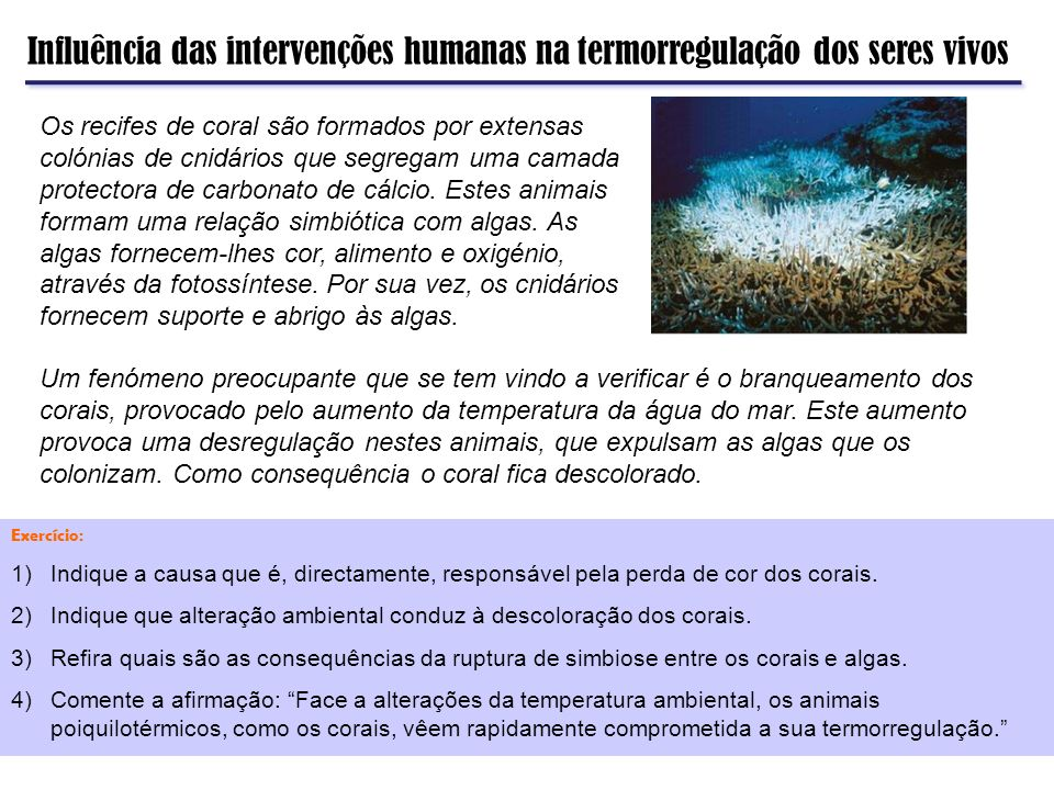 Influência das intervenções humanas na termorregulação dos seres vivos