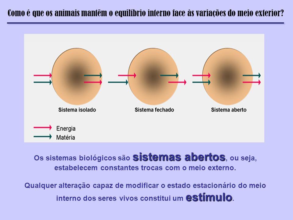 Termorregulação Como é que os animais mantêm o equilíbrio interno face às variações do meio exterior