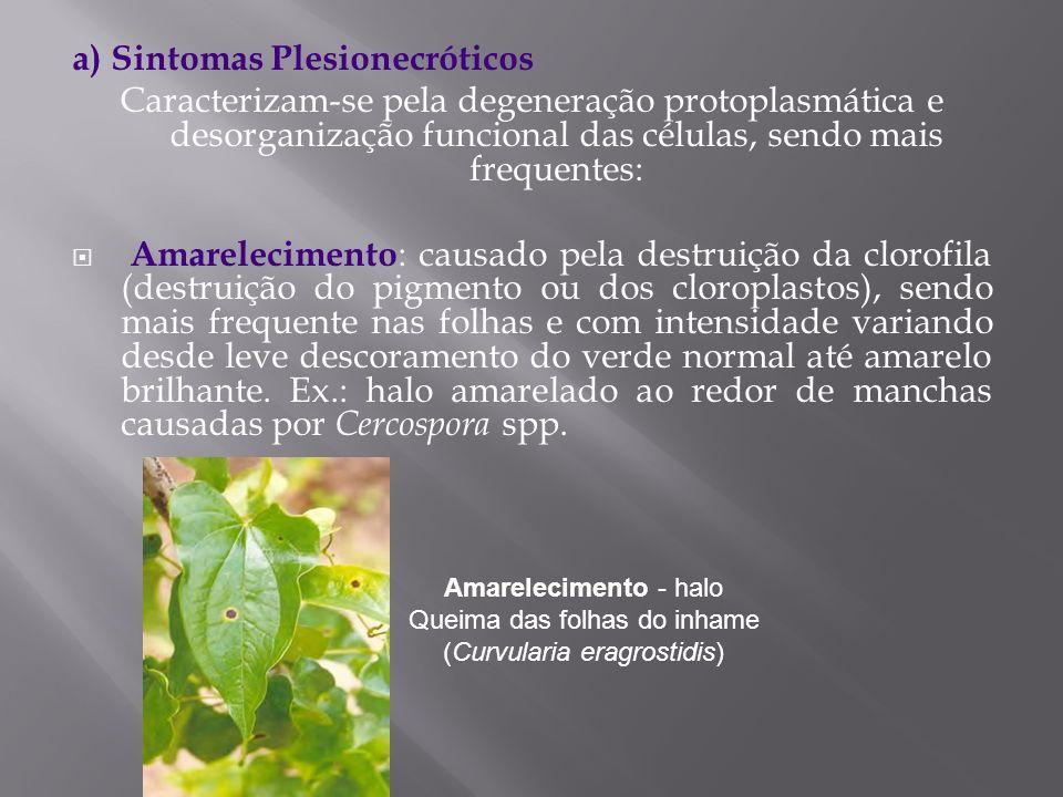 a) Sintomas Plesionecróticos