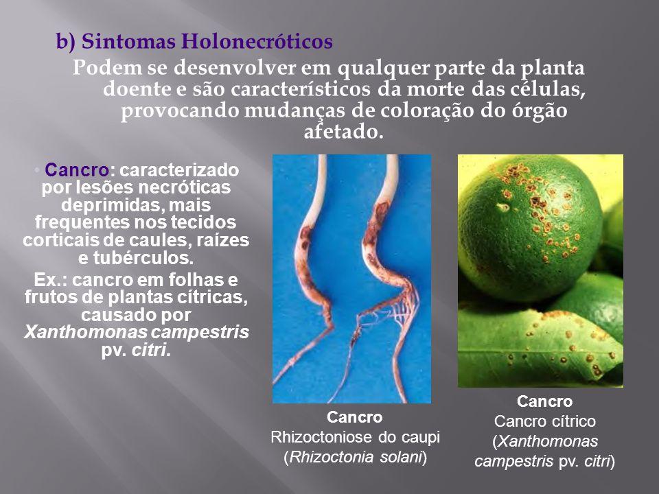 b) Sintomas Holonecróticos