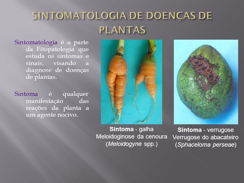 SINTOMATOLOGIA DE DOENÇAS DE PLANTAS