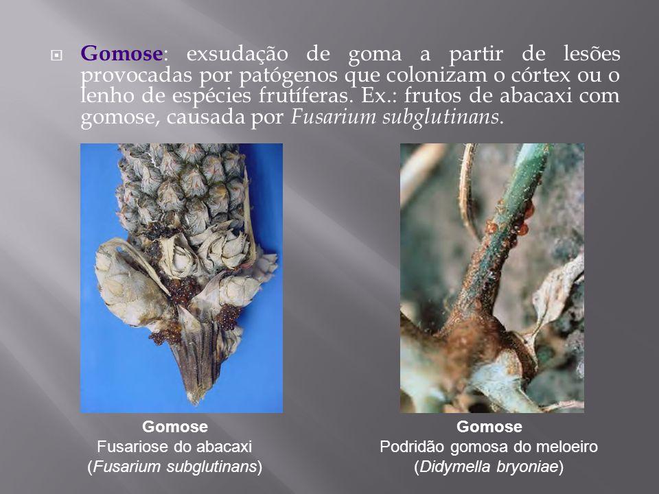 Gomose: exsudação de goma a partir de lesões provocadas por patógenos que colonizam o córtex ou o lenho de espécies frutíferas. Ex.: frutos de abacaxi com gomose, causada por Fusarium subglutinans.