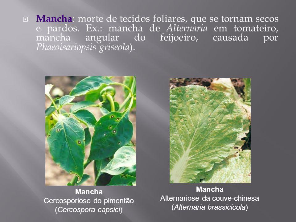Mancha: morte de tecidos foliares, que se tornam secos e pardos. Ex