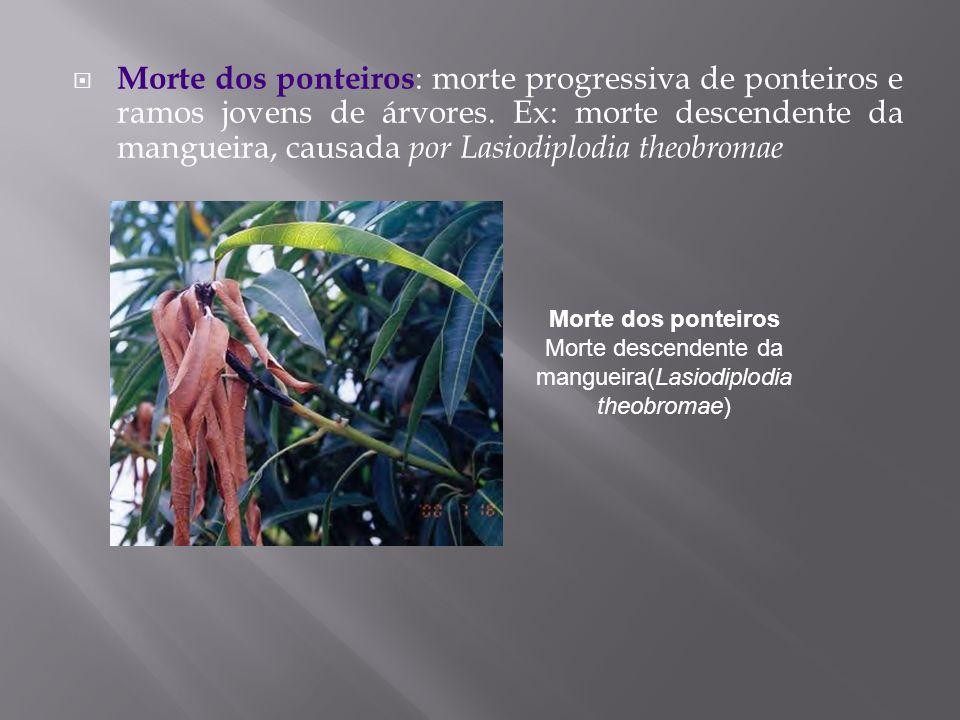 Morte dos ponteiros: morte progressiva de ponteiros e ramos jovens de árvores. Ex: morte descendente da mangueira, causada por Lasiodiplodia theobromae