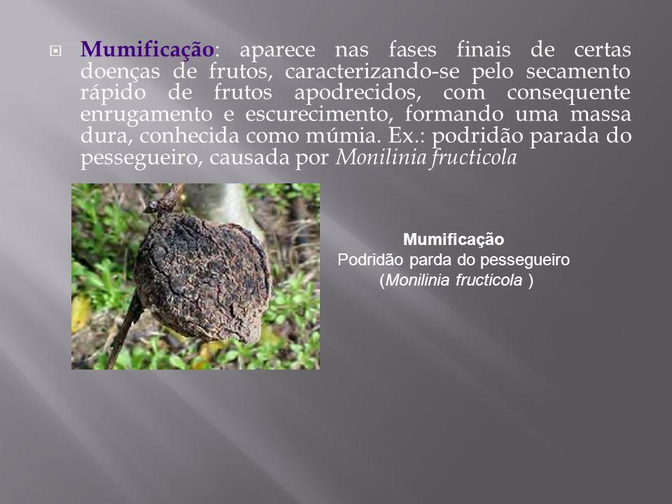 Mumificação Podridão parda do pessegueiro (Monilinia fructicola )
