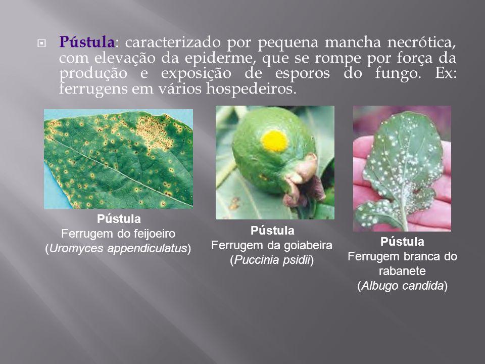 Pústula: caracterizado por pequena mancha necrótica, com elevação da epiderme, que se rompe por força da produção e exposição de esporos do fungo. Ex: ferrugens em vários hospedeiros.
