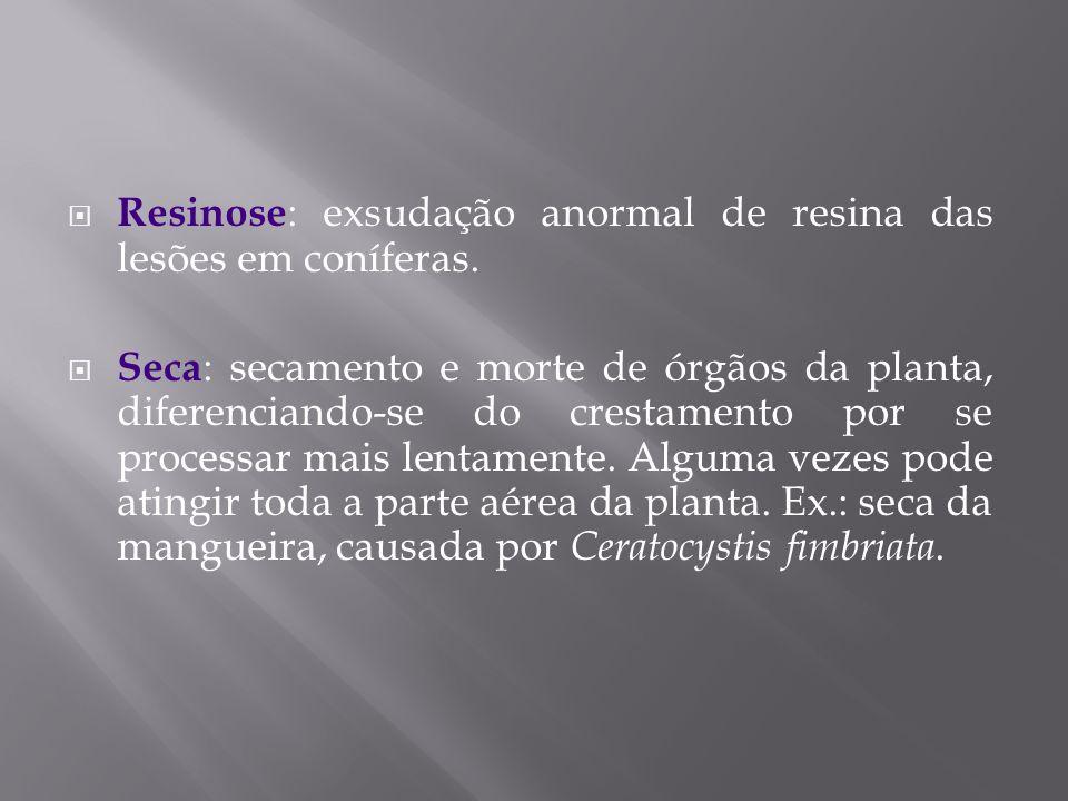 Resinose: exsudação anormal de resina das lesões em coníferas.