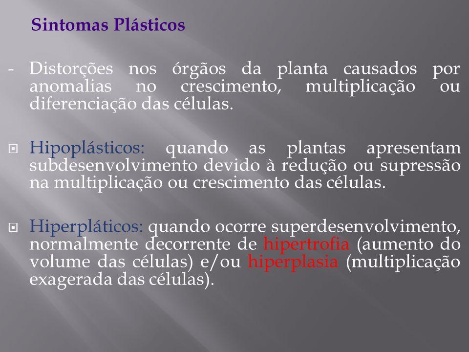 Sintomas Plásticos- Distorções nos órgãos da planta causados por anomalias no crescimento, multiplicação ou diferenciação das células.