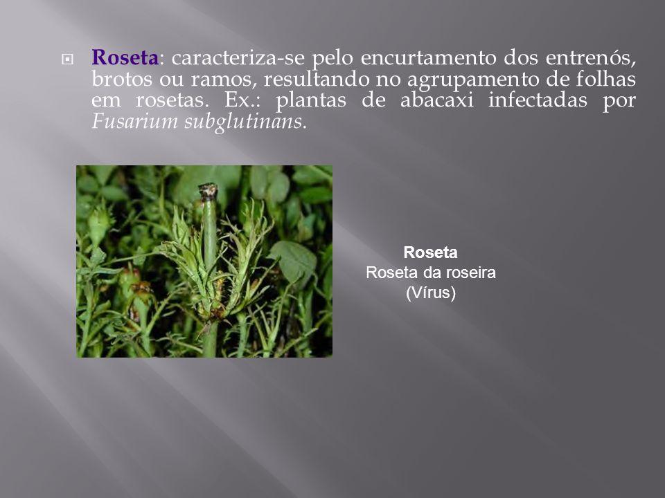 Roseta Roseta da roseira (Vírus)