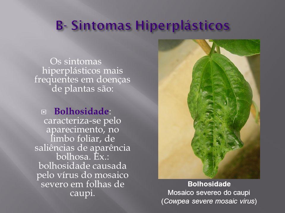 B- Sintomas Hiperplásticos