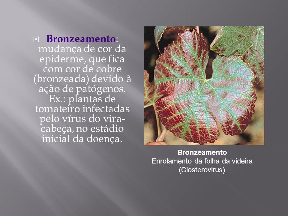 Bronzeamento Enrolamento da folha da videira (Closterovirus)