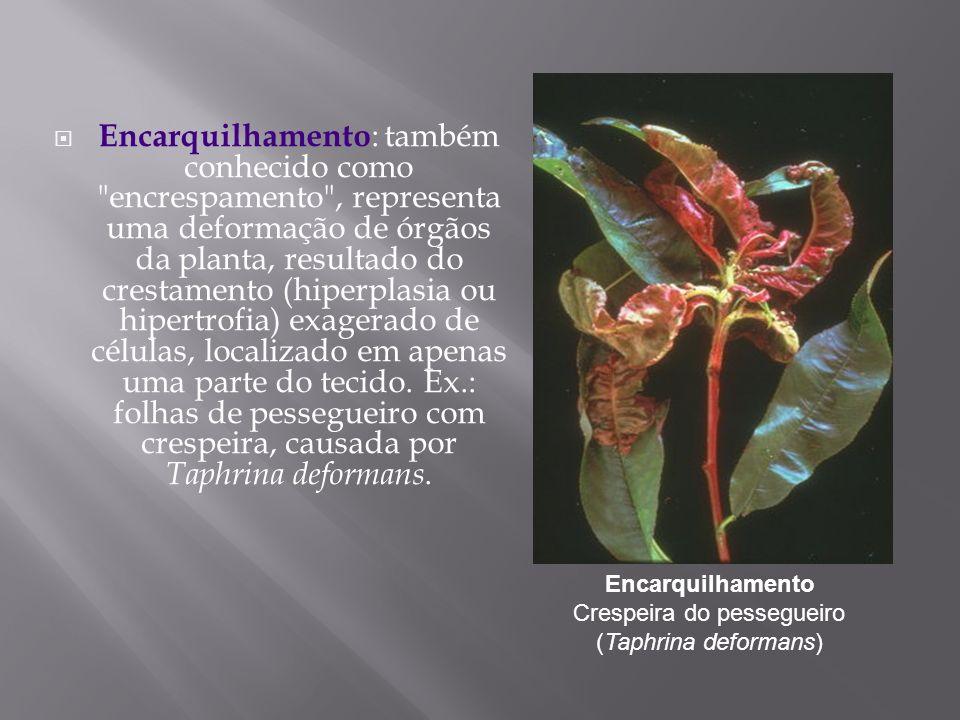 Encarquilhamento Crespeira do pessegueiro (Taphrina deformans)