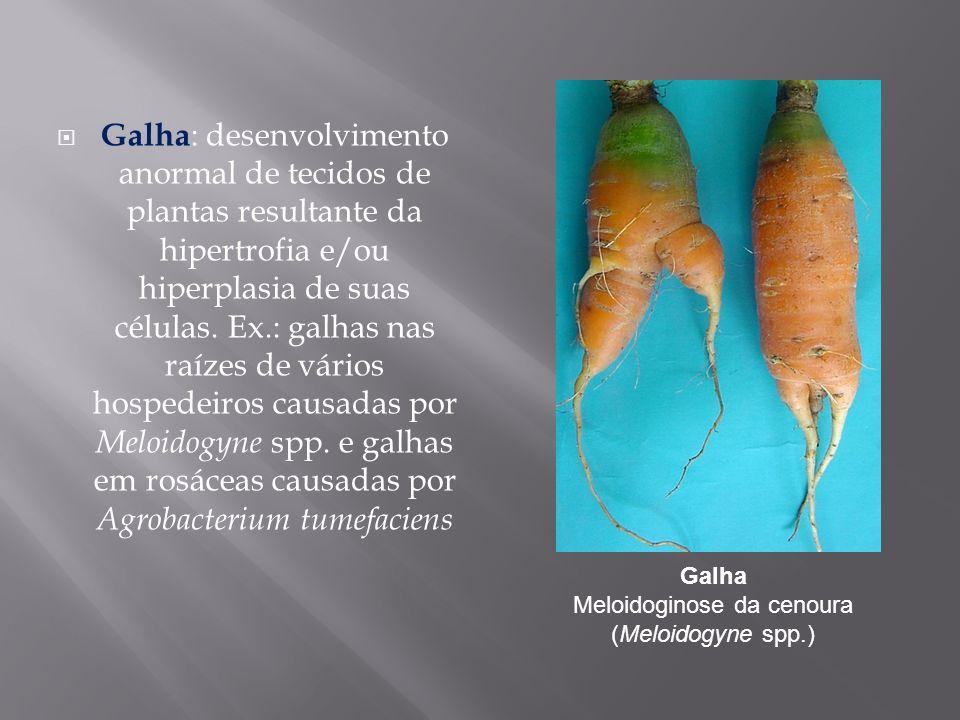 Galha Meloidoginose da cenoura (Meloidogyne spp.)