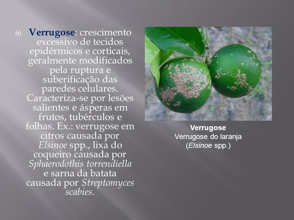 Verrugose Verrugose do laranja (Elsinoe spp.)