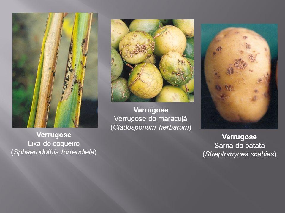 Verrugose Verrugose do maracujá (Cladosporium herbarum)