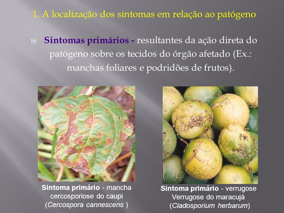 1. A localização dos sintomas em relação ao patógeno
