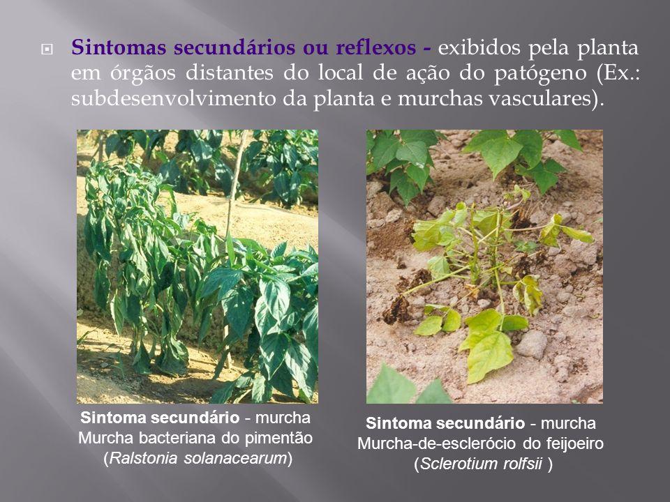 Sintomas secundários ou reflexos - exibidos pela planta em órgãos distantes do local de ação do patógeno (Ex.: subdesenvolvimento da planta e murchas vasculares).