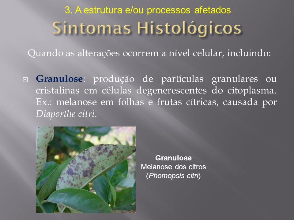 Sintomas Histológicos