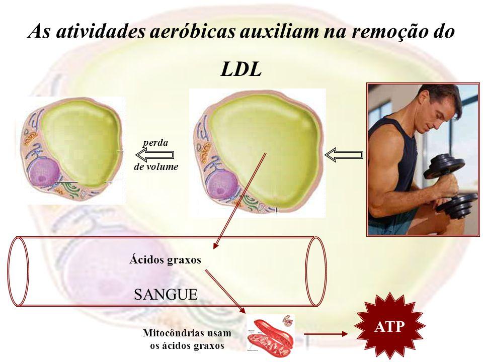 As atividades aeróbicas auxiliam na remoção do LDL