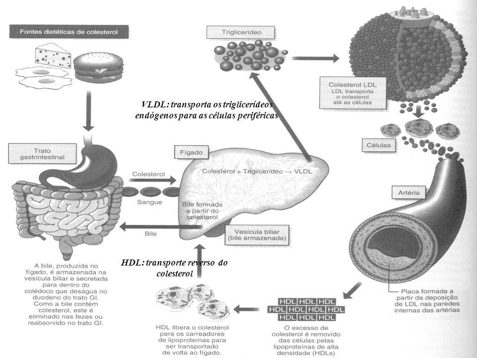 HDL: transporte reverso do colesterol