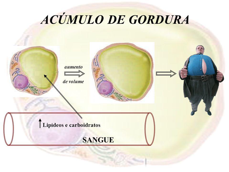Lipídeos e carboidratos