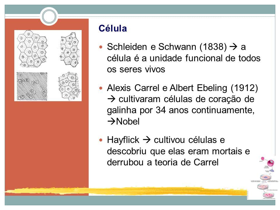 Célula Schleiden e Schwann (1838)  a célula é a unidade funcional de todos os seres vivos.