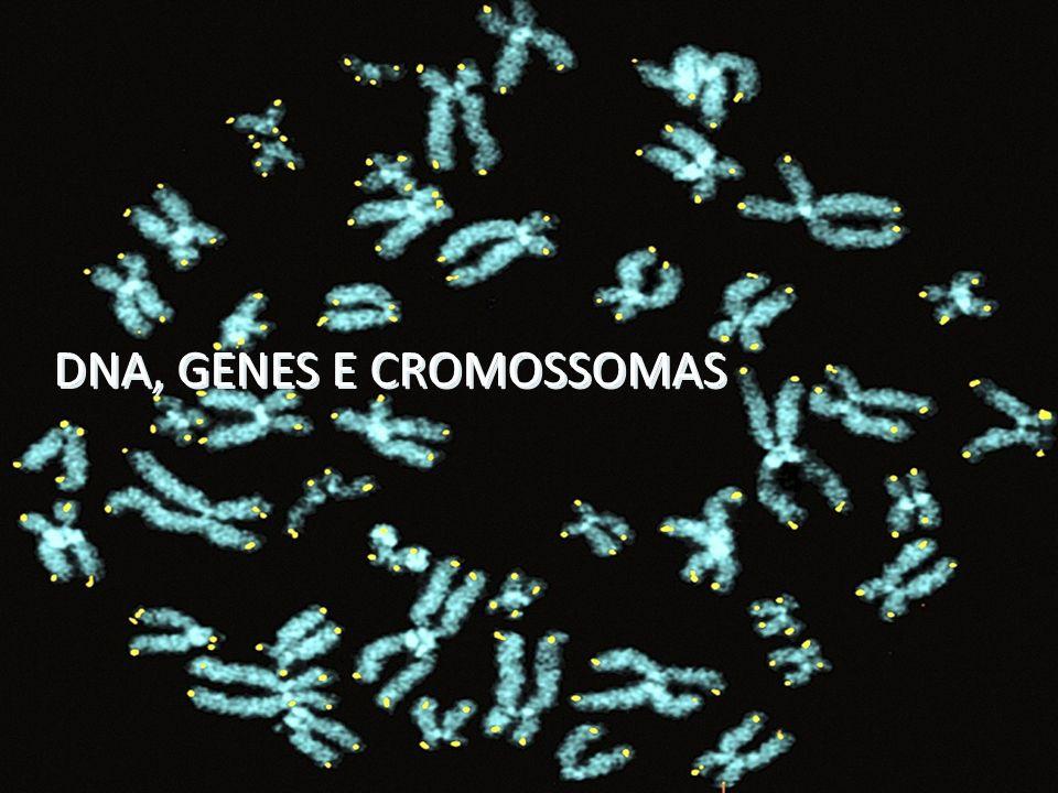 DNA, GENES E CROMOSSOMAS