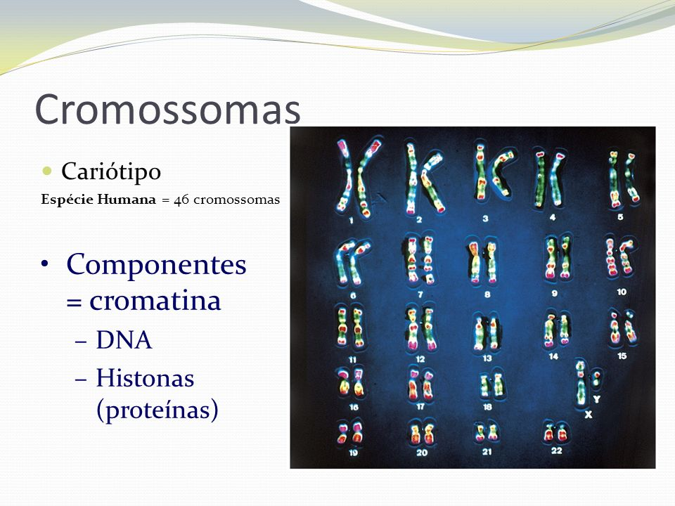 Cromossomas Componentes = cromatina DNA Histonas (proteínas) Cariótipo