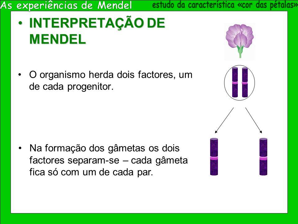As experiências de Mendel estudo da característica «cor das pétalas»