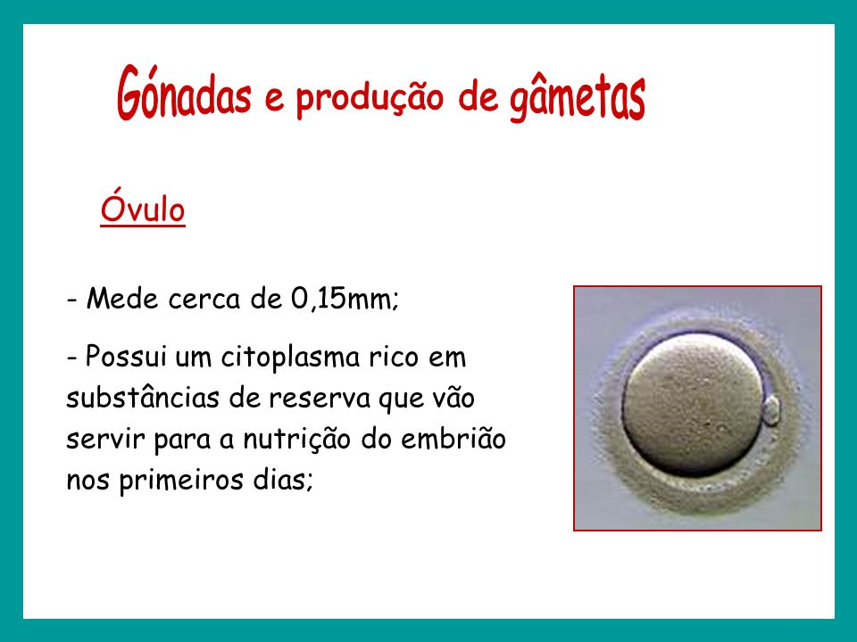 Gónadas e produção de gâmetas