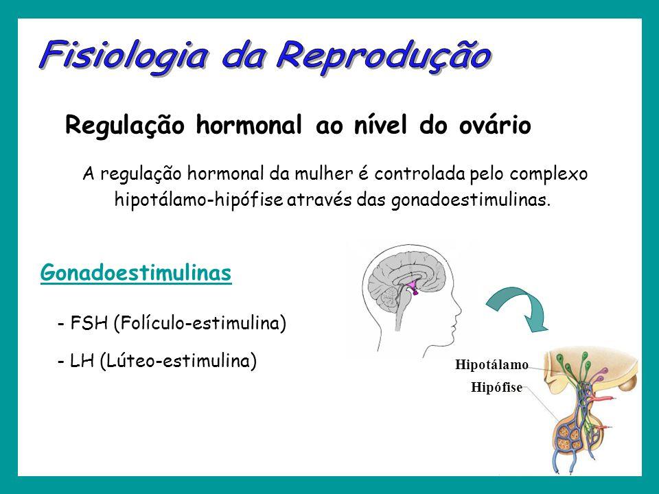 Regulação hormonal ao nível do ovário