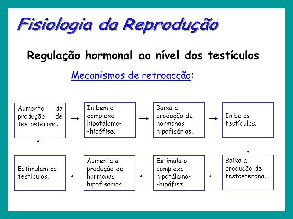 Regulação hormonal ao nível dos testículos