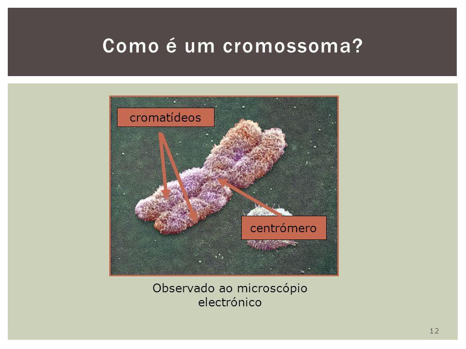 Observado ao microscópio electrónico