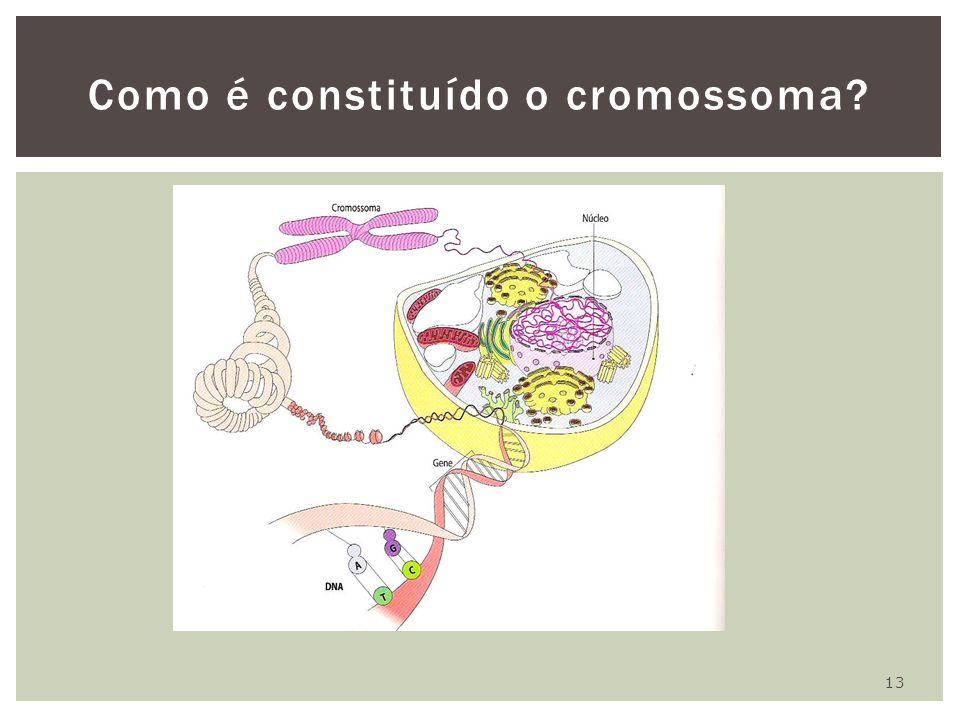 Como é constituído o cromossoma