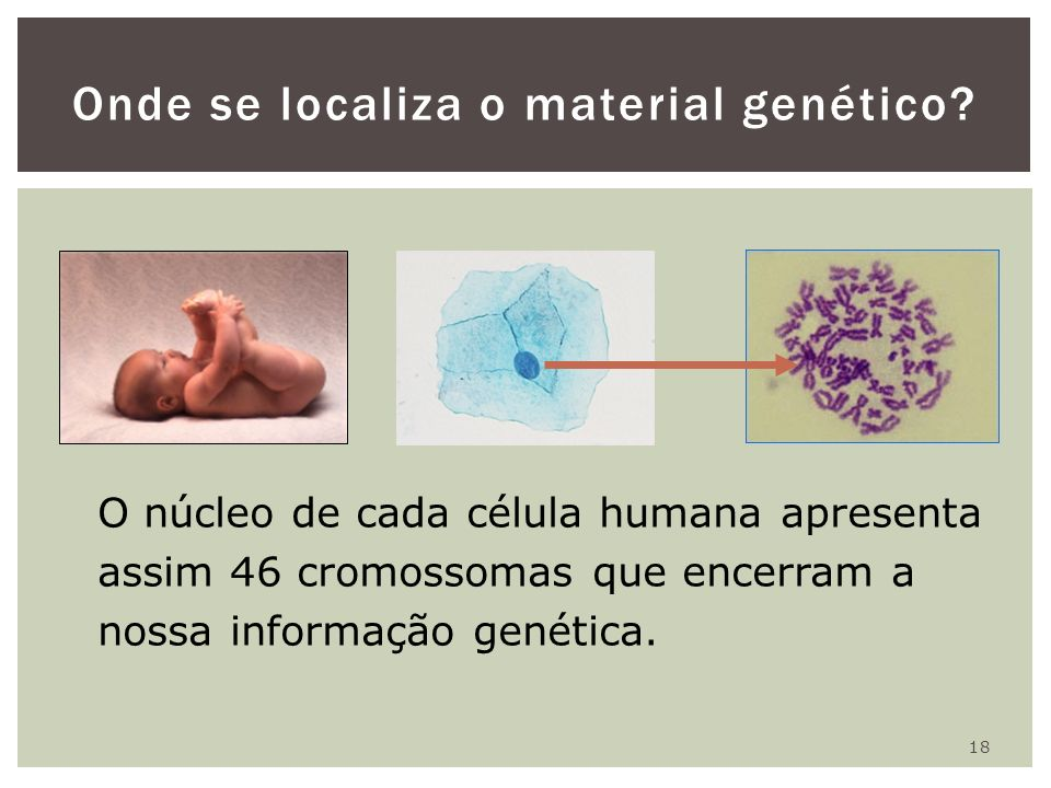 Onde se localiza o material genético