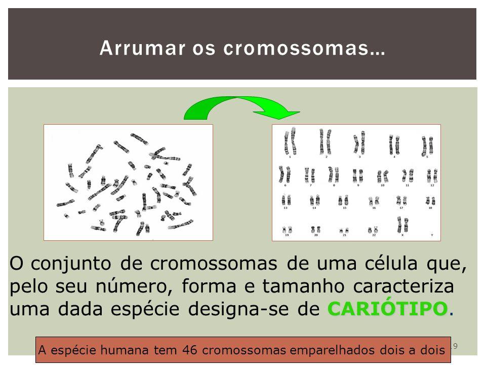 Arrumar os cromossomas…