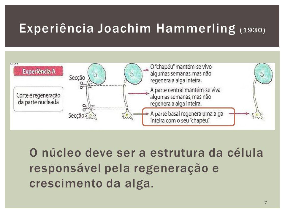 Experiência Joachim Hammerling (1930)