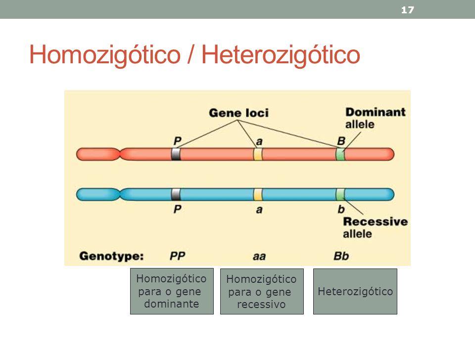 Homozigótico / Heterozigótico