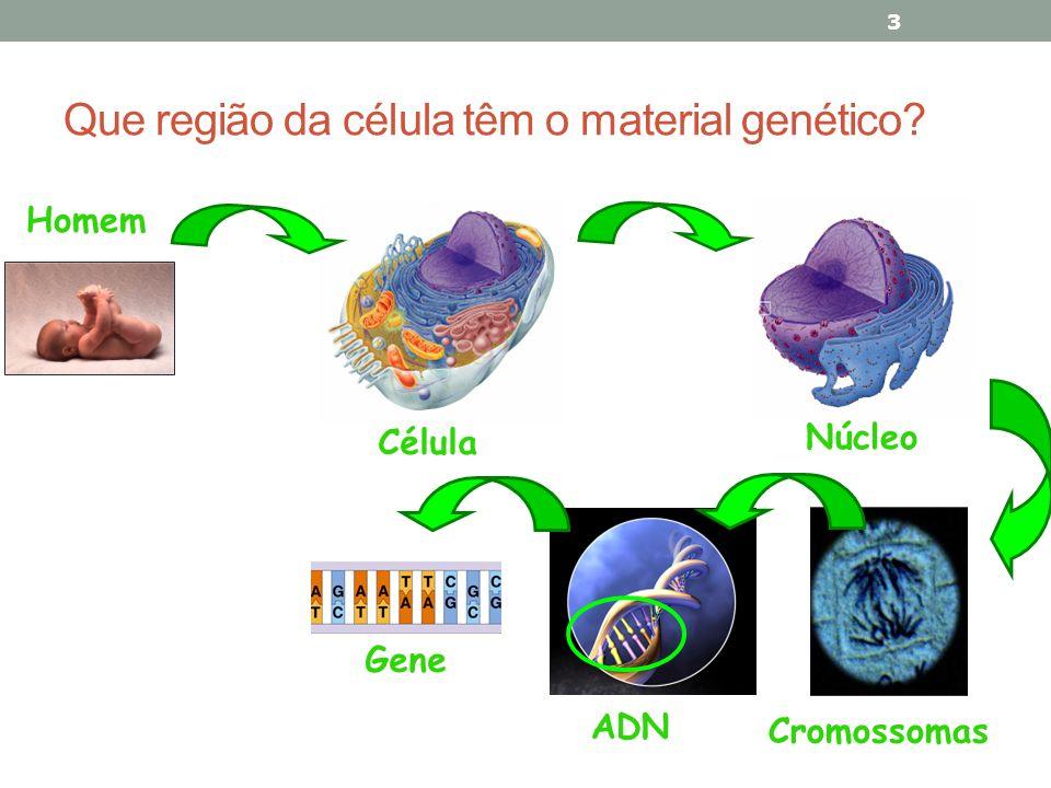Que região da célula têm o material genético