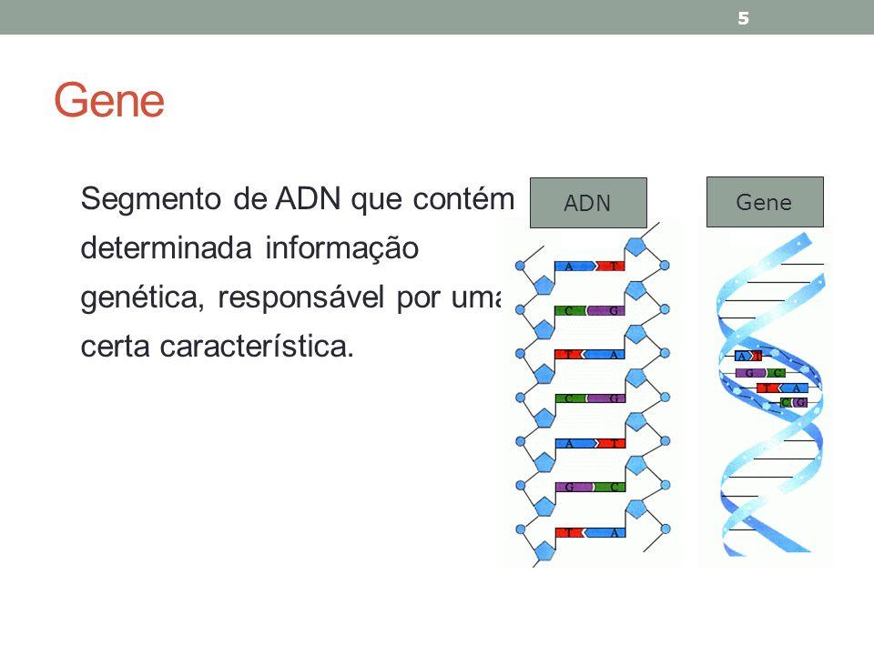 Gene Segmento de ADN que contém determinada informação genética, responsável por uma certa característica.